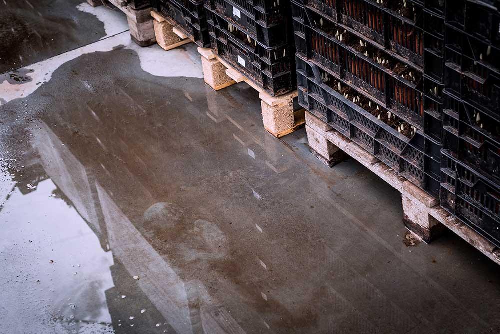 Wet pallets under the rain